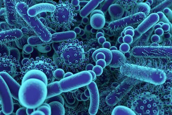 strevni mikrobiota